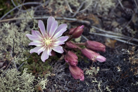 flower-2372987_1280